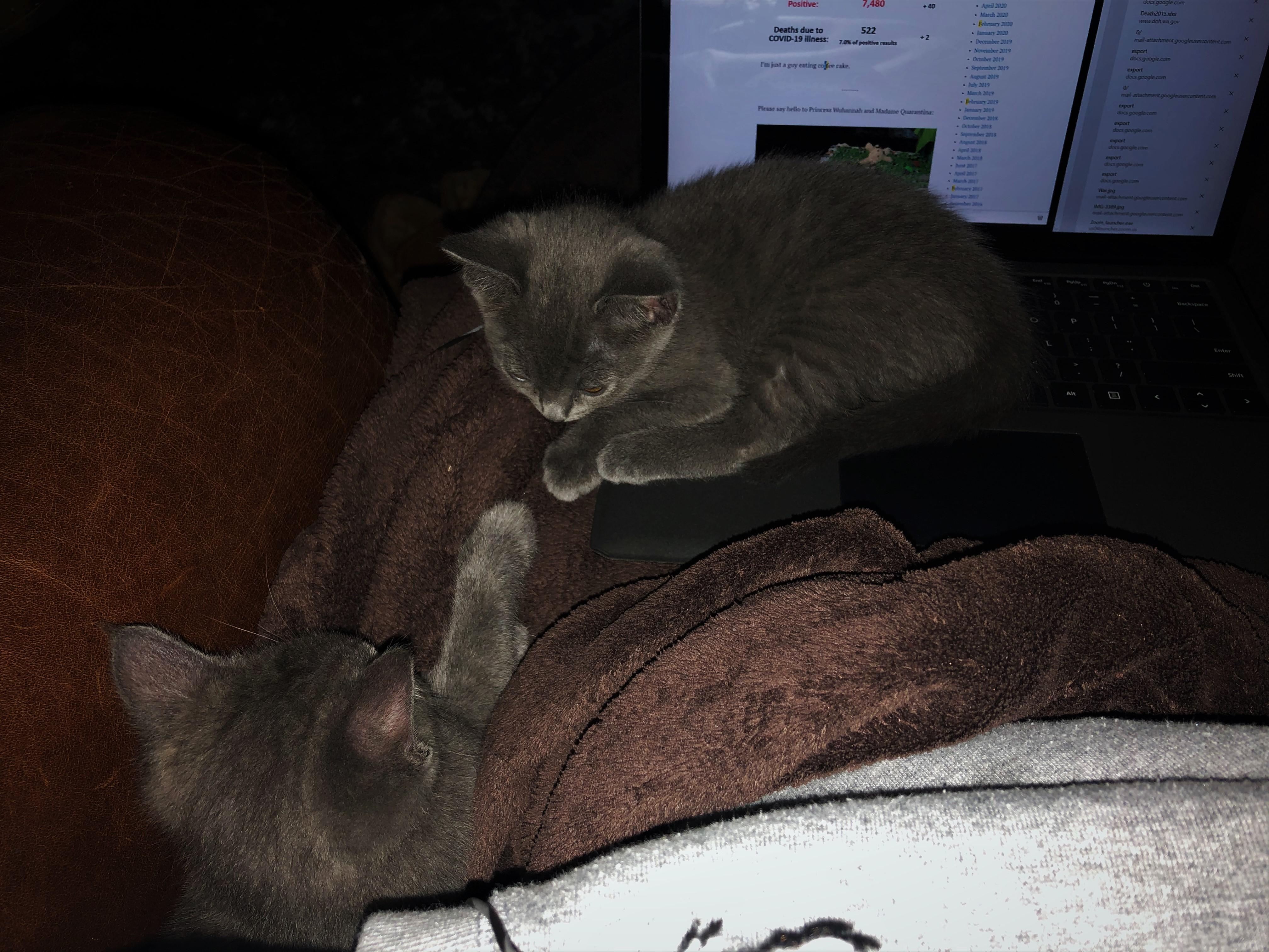 Keyboard Cats